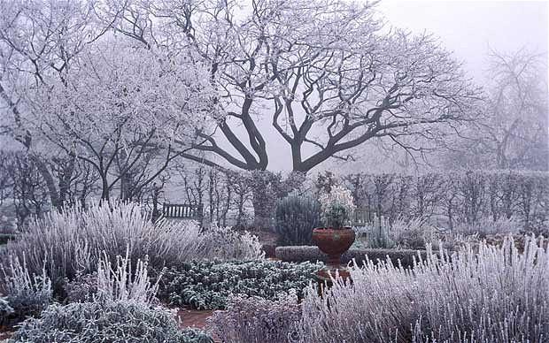New Years Garden