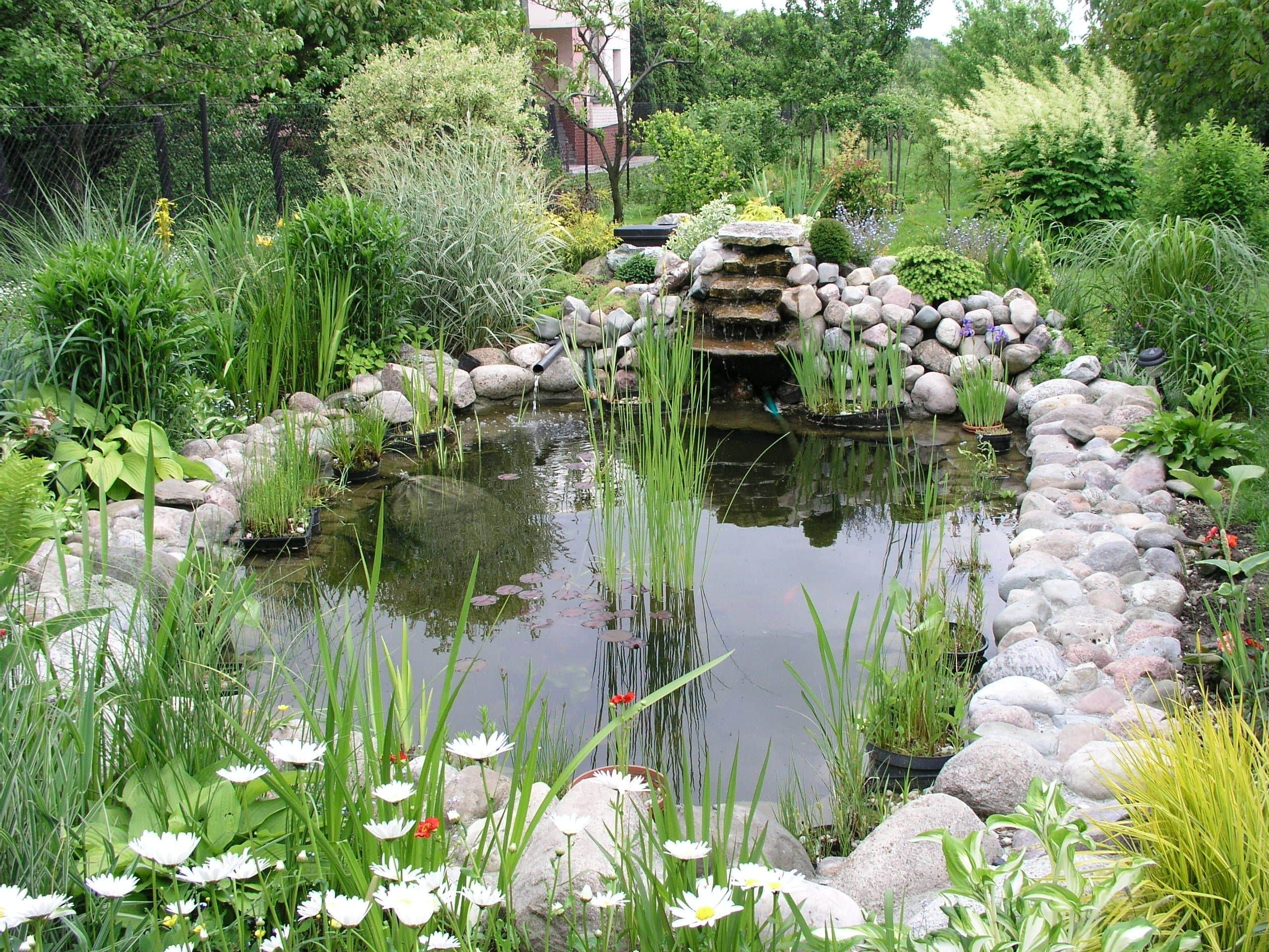 Tidying Your Garden Pond