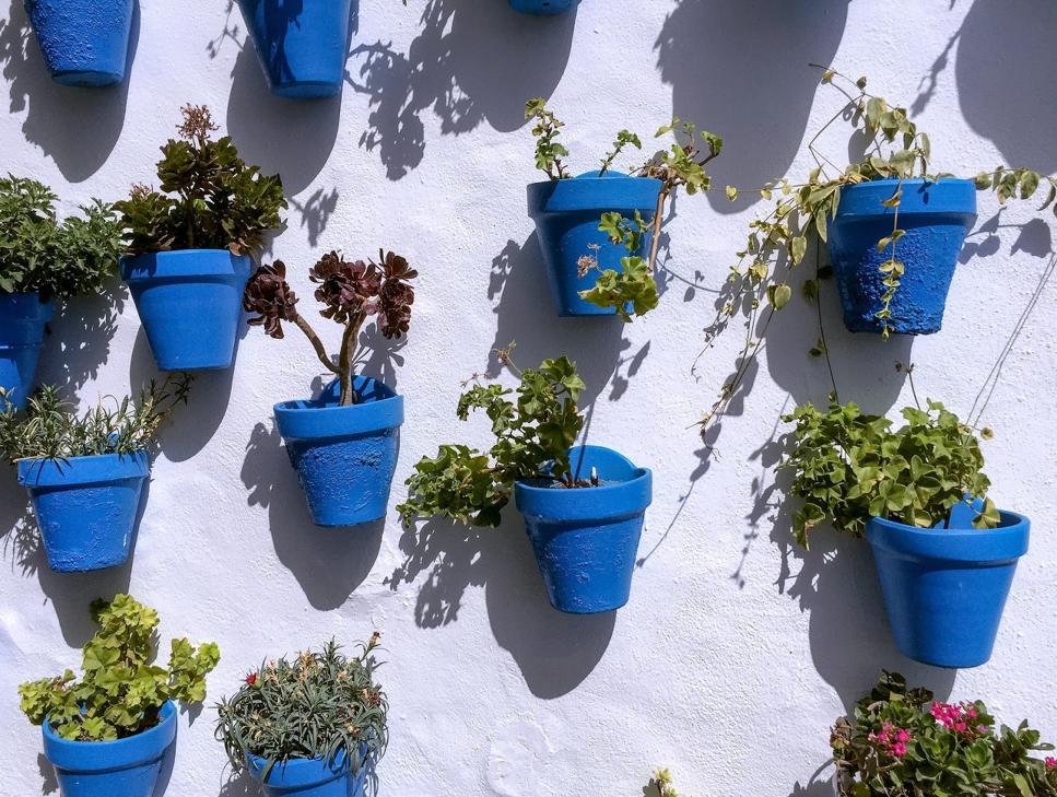 Plant Pots or Planters